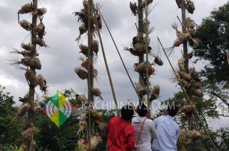 ကချင်ရိုးရာဓလေ့အတိုင်းပြုလုပ်သည့် ကျိန်ထောင်ပါ 'ကောက်သစ်စားကျေးဇူးတော်ချီးမွမ်းခြင်းပွဲတော်'