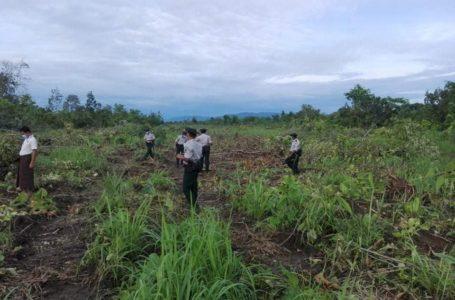 တာလောကြီးကျေးရွာ နှစ်ရှည်ပင်စိုက်ပျိုးမြေနေရာ ဖျက်စီးခံရမှု ပြည်နယ်အစိုးရ စုံစမ်းနေ