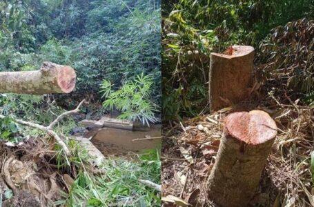 သစ်ထုတ်လုပ်မှုကြောင့် မြစ်ဆုံဒေသခံများ သောက်သုံးရေအတွက် အခက်အခဲဖြစ်လာ